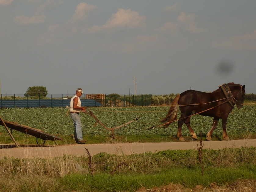 Technology breakthrough: middle-age plowing against solar farms
